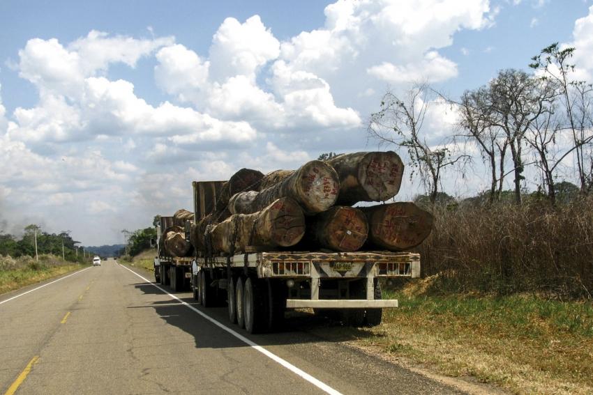 La madera corrupción desmedida.  III  Parte